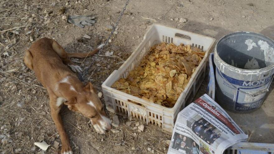 Un perro encadenado en la finca de sus 'presuntos' maltratadores. Foto: La Casita de López