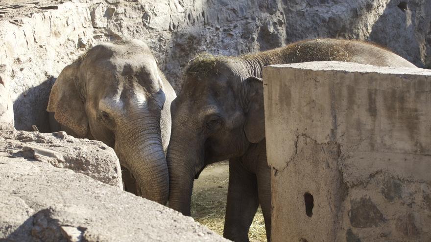 Pocha y Guillermina, en el foso en el que viven en el zoo de Mendoza (Argentina). Foto: Junia Machado, Santuario de Elefantes de Brasil.