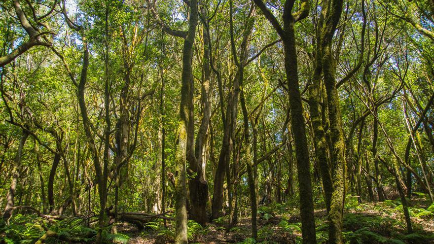 Los Barranquillos, Parque Nacional de Garajonay