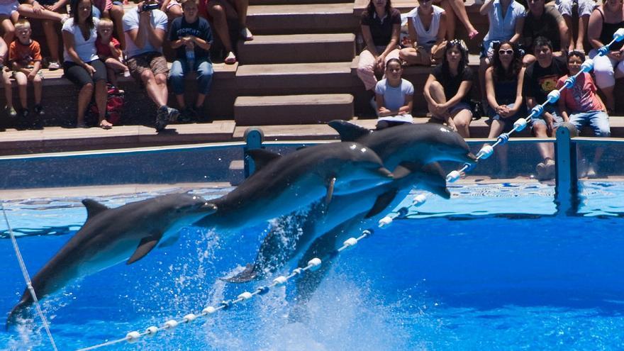 Delfines saltando en un show.