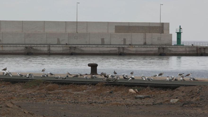 Muelle de Arinaga sin barcos. (QUIQUE CURBELO)
