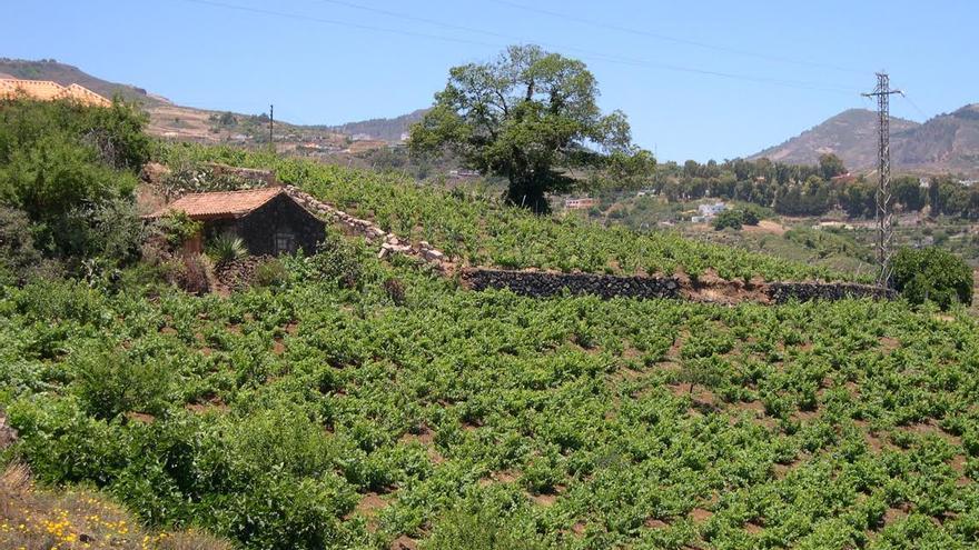 Imagen cedida por el Cabildo de Gran Canaria.
