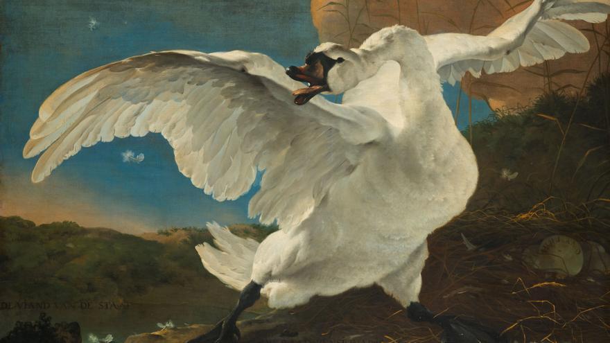 'El cisne amenazado', Jan Asselijn (1650). Heritage Image Partnership Ltd./ Alamy Stock Photo