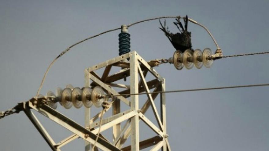 Aves muertas en un tendido eléctrico en Canarias