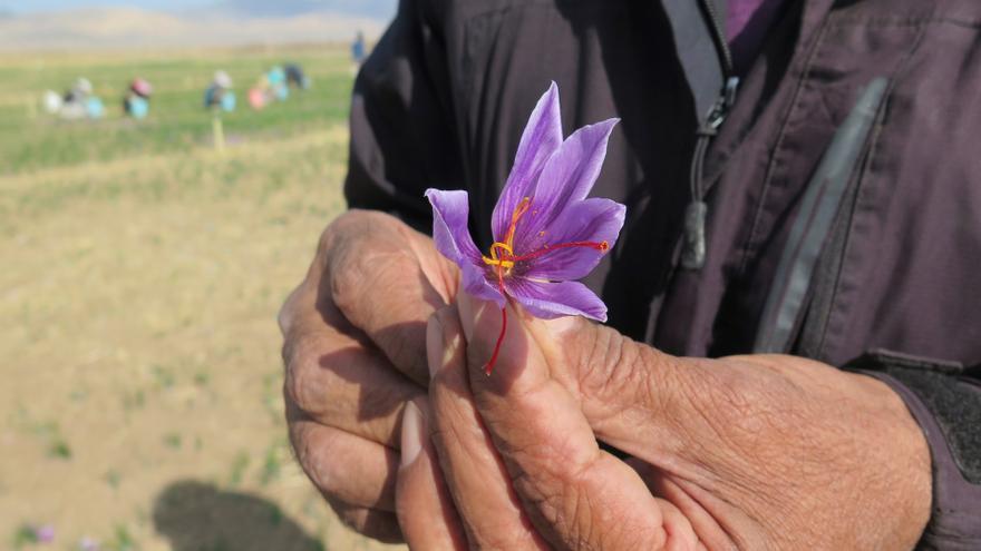 El azafrán, producto estrella de Irán, no escapa al impacto de la pandemia