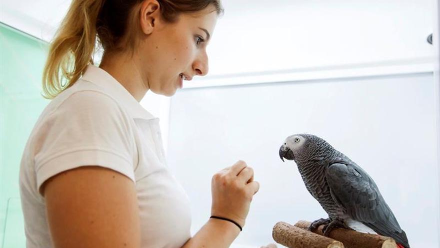 Una cuidadora estudia el comportamiento de una de las aves de Loro Parque Fundación / Ramón de la Rocha/EFE