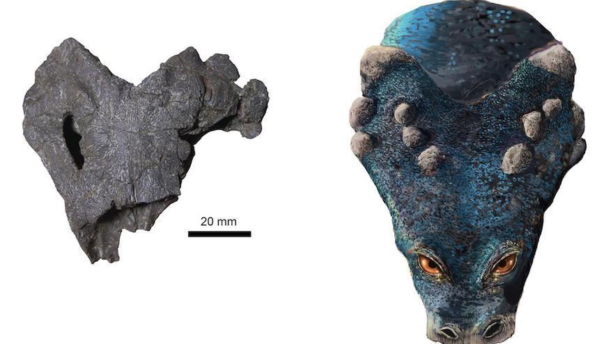 Reconstrucción de la cabeza de la especie de placodonto encontrado en el embalse de El Atance (Guadalajara)