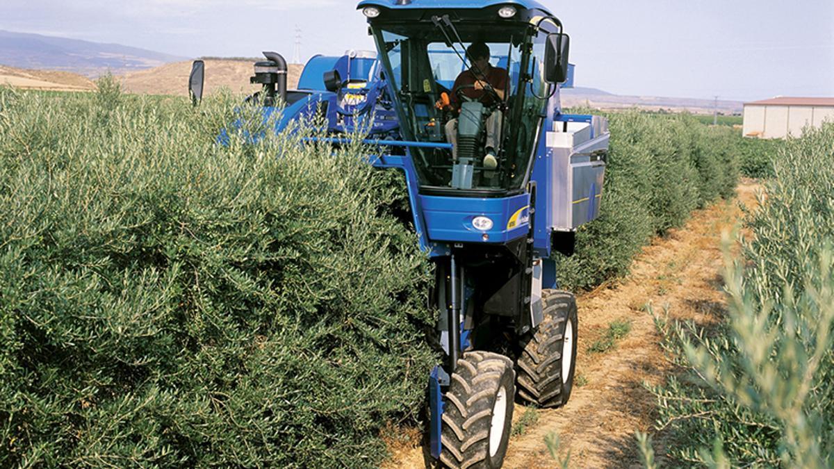 Una cosechadora en un cultivo de súper intensivo.