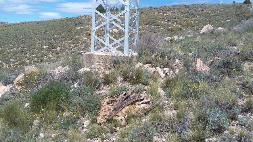 En mayo, el Seprona encontró un buitre electrocutado y restos de otro