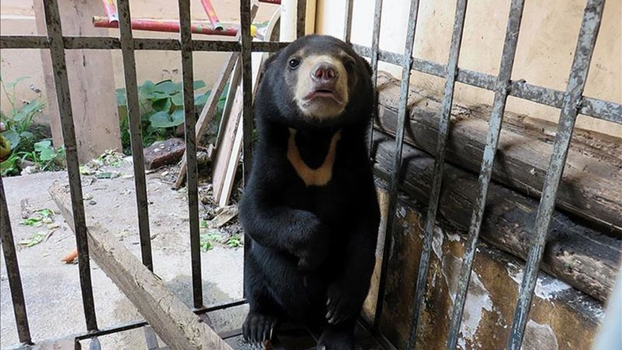 Resultado de imagen para osos vietnam
