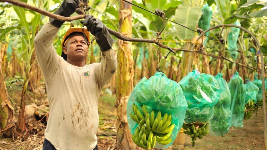 Bananeros en Colombia. Foto de Iván M. García.