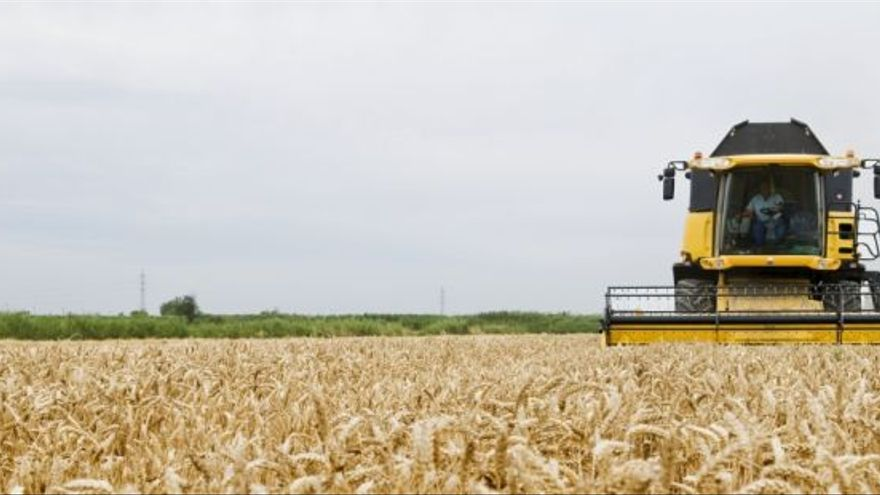 Cosechadora trabajando en un campo de trigo.