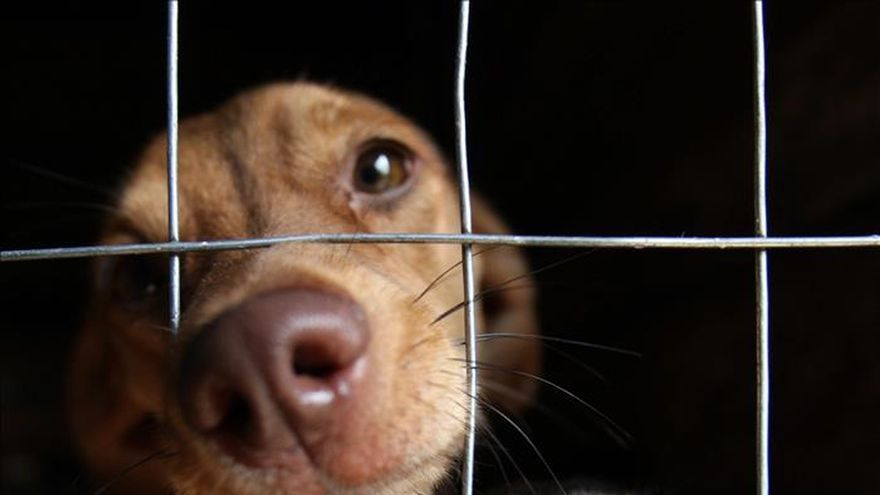 El abandono, la lacra de las mascotas que no celebrarán San Antón