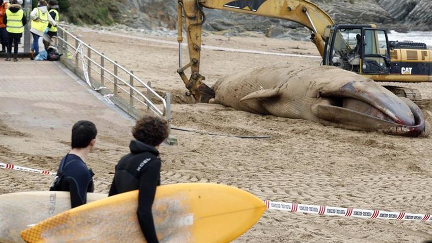 Concluyen las labores de retirada de la ballena muerta varada en Sopela