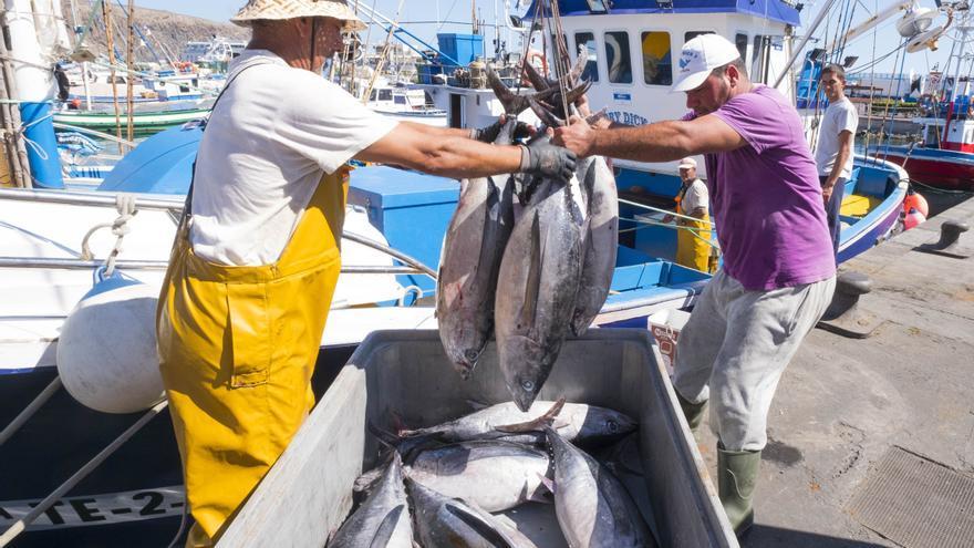 Pescadores descargan ejemplares de atún en el puerto de Los Cristianos