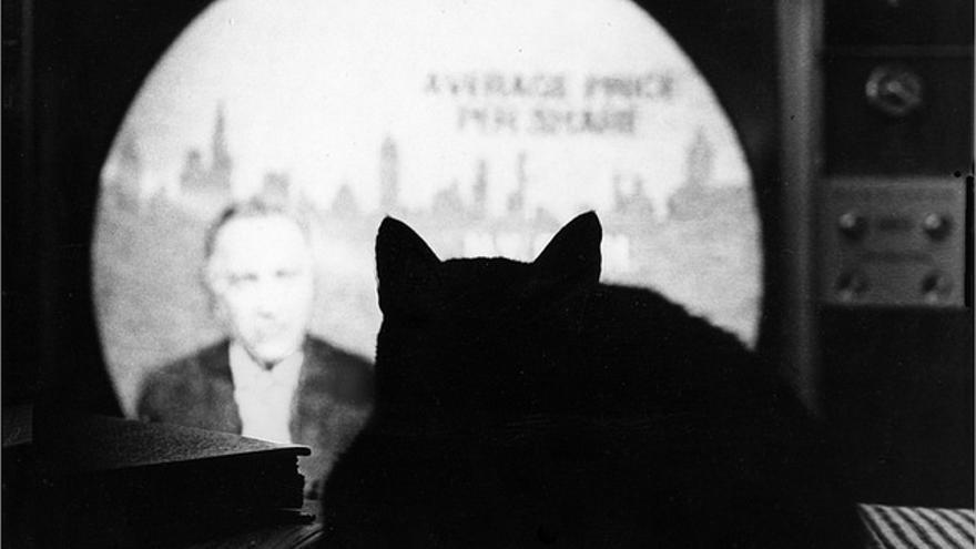Los gatos se han convertido en héroes y en víctimas de la sociedad en algunas noticias de 'The New York Times'  (Foto: David Dodge | Flickr)