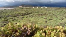 Tabaibal dulce protegido en el municipio de Arico.