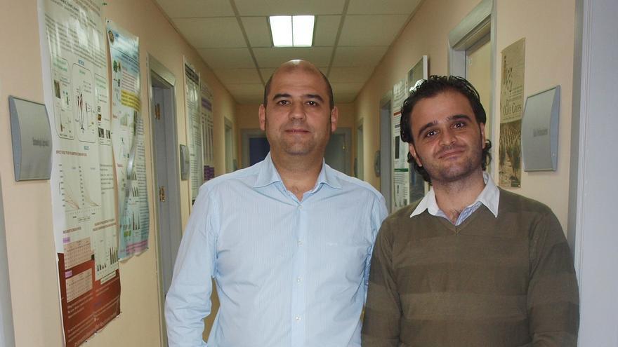 Investigadores de al UCO desarrollan un método biológico que mejora el control de plagas del olivo