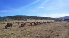 Castilla-La Mancha prorroga un año más las ayudas para agricultores y ganaderos en ecológico