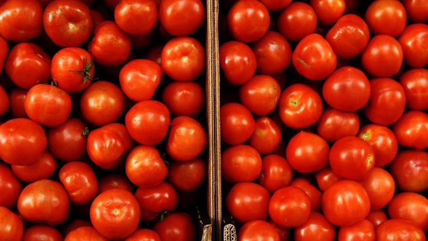Confirman la presencia de etefón en tomates tras una alerta sanitaria
