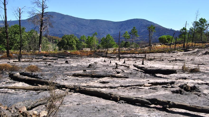 Paisaje de pinos devorado por el fuego junto a Acebo / JCD