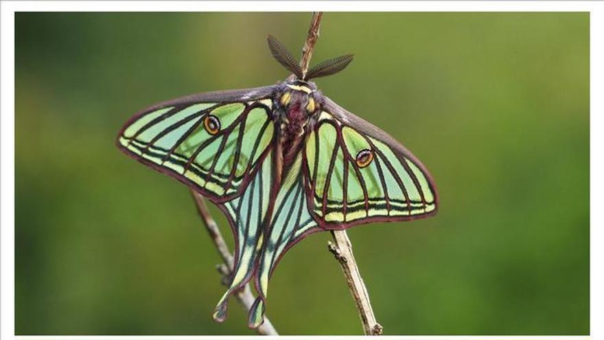 Primer Plan de Conservación para las 4.200 especies de mariposas en España