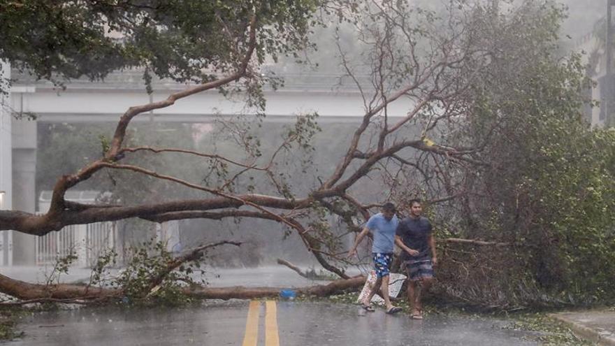 Dos hombres caminan junto a árboles derribados a lo largo de la avenida Brickell por el impacto del huracán Irma en Miami, Florida, EEUU, este 10 de septiembre de 2017.