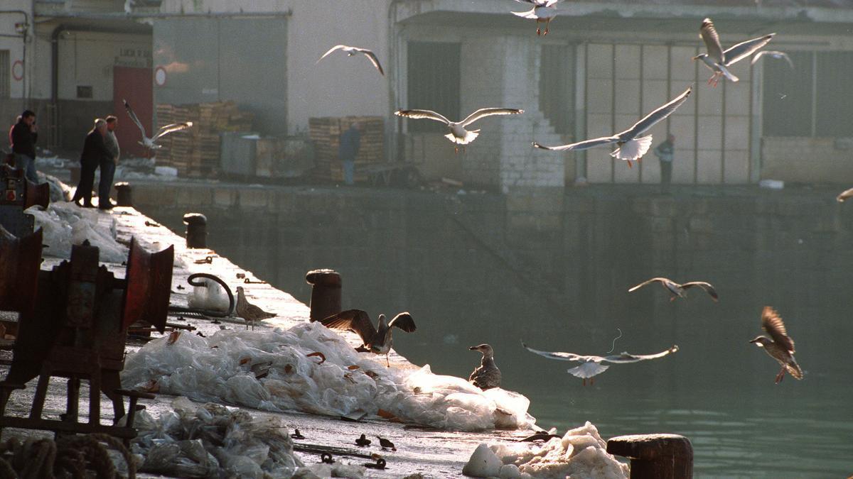 Unas gaviotas buscan restos de pescado al término de la faena de descarga de mercancías de los barcos en el muelle del puerto de Vigo. EFE/voo/Archivo