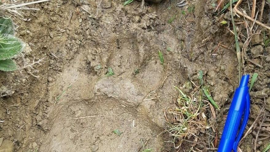 UAGN se manifestará el 22 de agosto en Aínsa (Huesca) para exigir la retirada de los osos del Pirineo