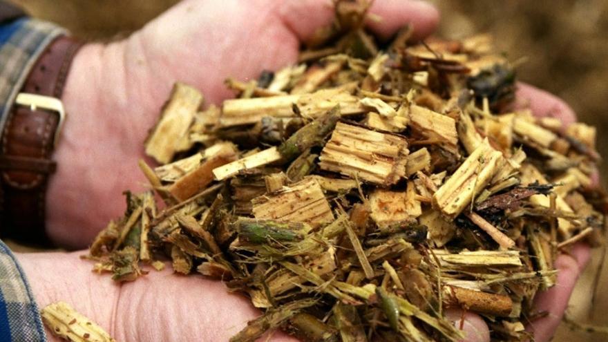 """Biomasa: la renovable neutra para las instituciones que las asociaciones ecologistas califican de """"energía negra""""  Biomasa-forestal_EDIIMA20190830_0497_5"""