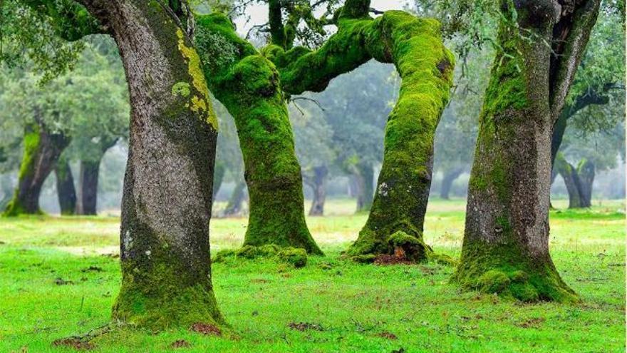 Dehesa Extremadura invierno musgo