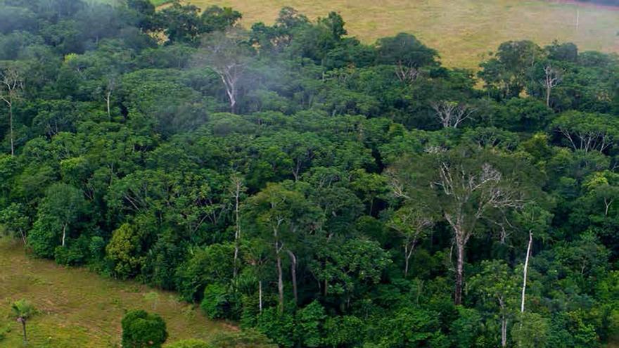 Resto de un bosque aislado por tierras de cultivo / FAO