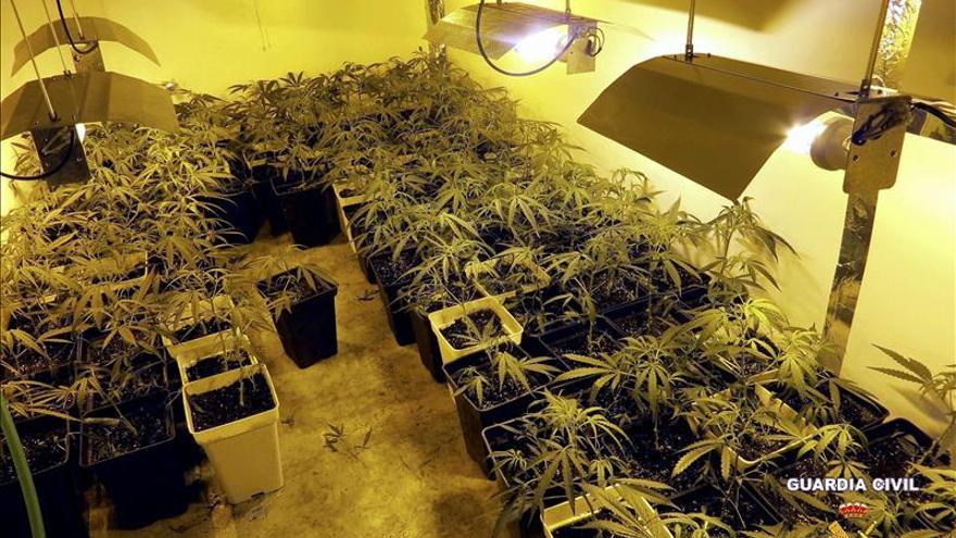 Detienen a un individuo que guardaba 300 plantas de marihuana en su sótano