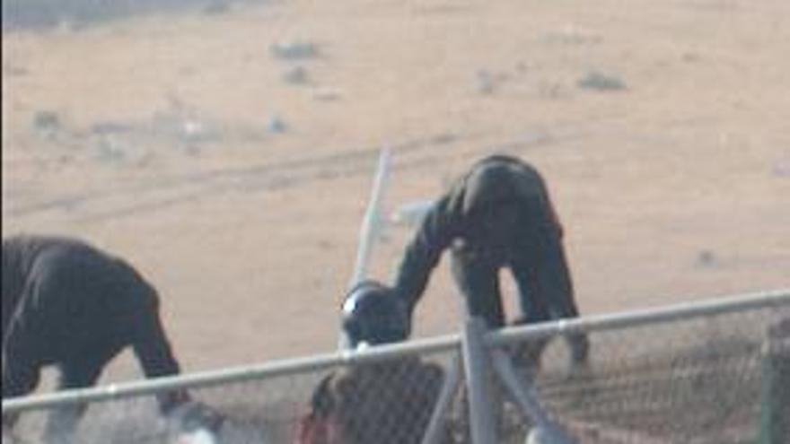 Una antidisturbios rocía con gas a uno de los inmigrantes que estaba en lo alto de la valla de seis metros de altura en su intento de alcanzar Melilla el 1 de mayo/ Fotografía: José Palazón.