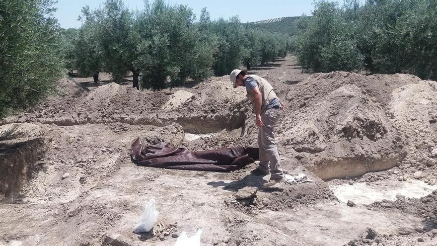 Los trabajos en una fosa de Castro del Río concluyen con 12 cuerpos exhumados