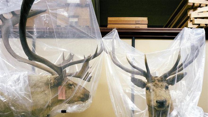 Londres plantea una mirada crítica sobre la relación entre humanos y animales