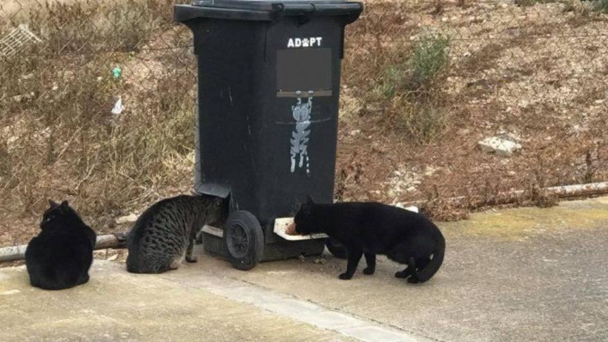 Gatos en un CatDonald. Foto: LlobreGats.com
