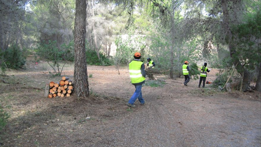 Operarios realizando una limpieza y adecuación forestal de un pinar valenciano.