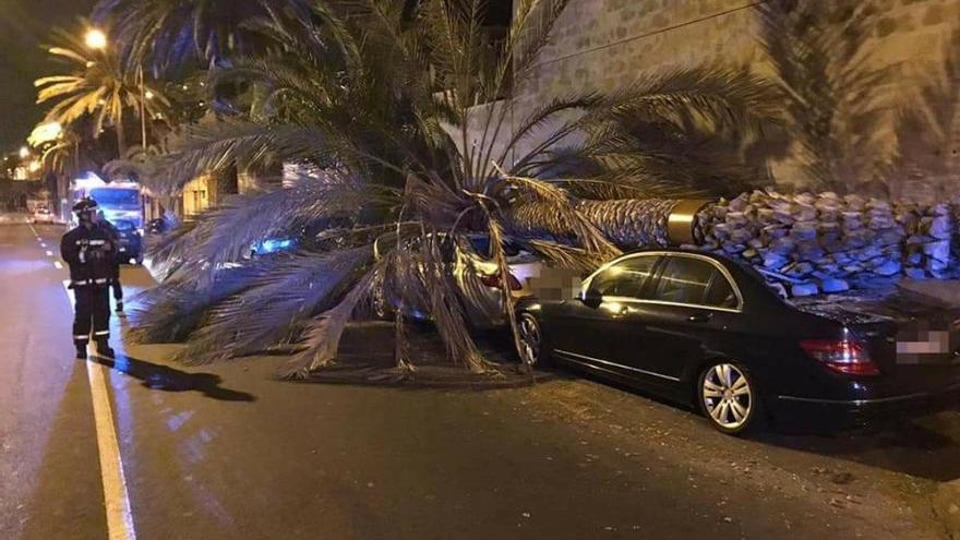 Cae una palmera de grandes dimensiones sobre dos vehículos en el Paseo de Chil