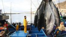 Madrid confirma el fracaso de Canarias en la mejora de su cuota de atún rojo