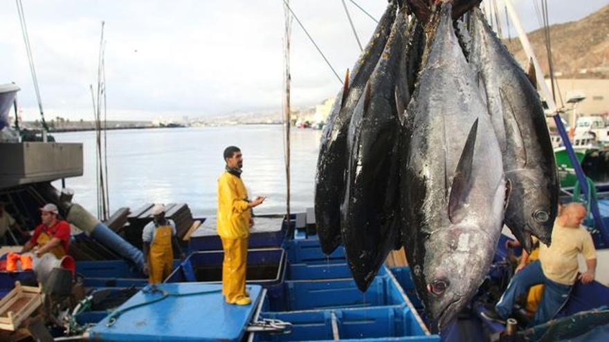 Descarga de atunes en el puerto de Santa Cruz, en una foto de archivo