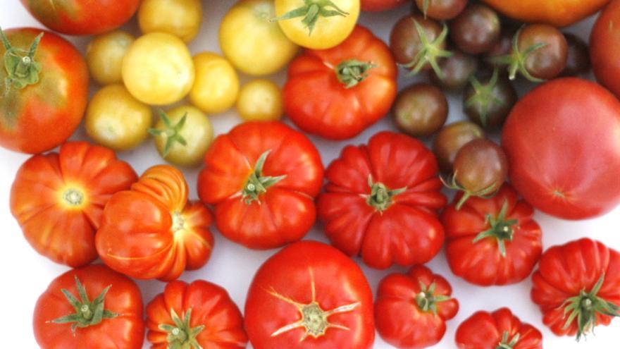 Variedades de tomates de El Huerto de Lola.