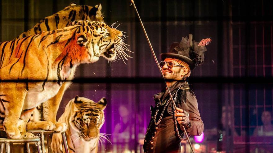 André-Joseph Bouglione, famoso domador de circo, antes de renunciar a la explotación de animales y crear el EcoCirque Bouglione