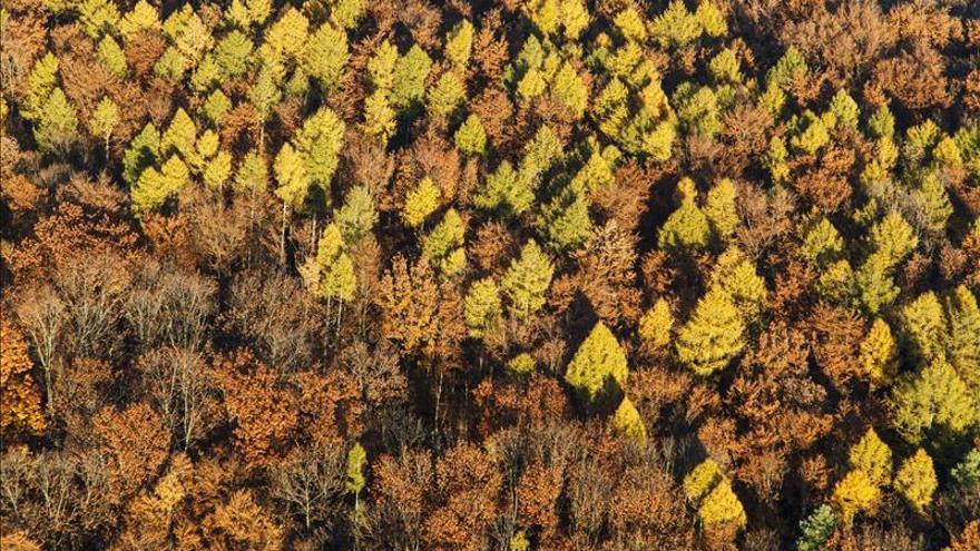 Vacunar árboles reduce costes y elimina plagas sin dañar el medioambiente