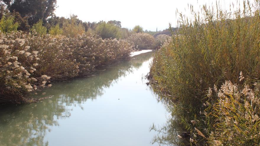 El río Segura a su paso por el paraje de la Contraparada / PSS