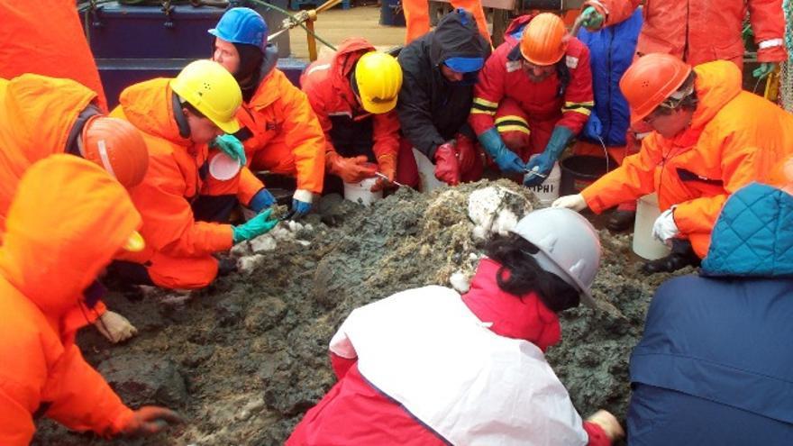 A bordo del Polarstern. Enero de 2004. Científicos recolectando en cubierta organismos pescados con pescas de arrastre selectivas en la zona de Austasen./Sergio Rossi