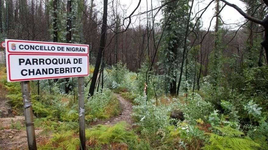 Incendios forestales: los nombres propios de las tormentas de fuego y llamas