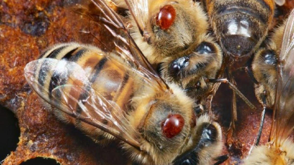 El aumento creciente y continuo de la toxicidad de los pesticidas mata cada vez más polinizadores e insectos nacidos en el agua.