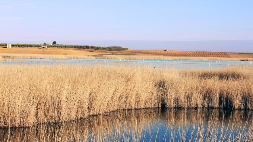 Laguna del Taray (Quero, Toledo) FOTO: Fundación Global Nature