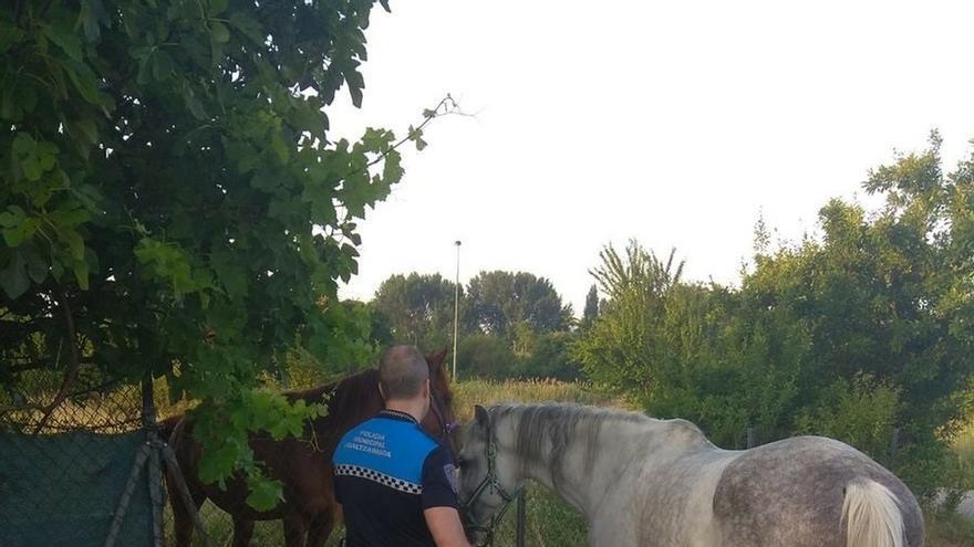 Retirados dos caballos de la vía pública en San Jorge